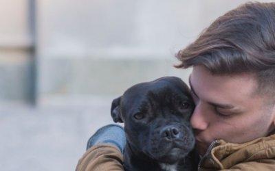 How Can Proper Nutrition Help Prevent Pet Sensitivity?
