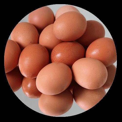 eggs - Gluten Intolerance