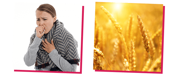 wheat allergy pictures - Gluten Allergy